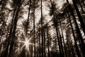 Sun rays in the woods Stock Photos