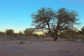 The sun sets behind a tree near San Pedro de Atacama, Atacama desert, Chile Royalty Free Stock Photo