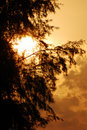 Sun setting behind tree Royalty Free Stock Photography