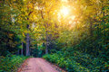 Sun shine forest and road Royalty Free Stock Photo
