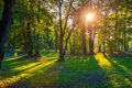 Sun shine through trees Royalty Free Stock Photo