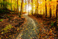 Sun Shining Down the Golden Forest Path Royalty Free Stock Photo