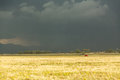 Sun shining on grassland under storym and rain Royalty Free Stock Photo