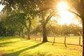 Sun shining at the park is benalla victoria australia Royalty Free Stock Photo