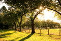Sun shining in a park between the trees Stock Photography
