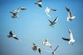 The sun is shining and seagulls flying in a group in the sky Royalty Free Stock Photo