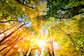 Sun shining through summer autumn trees and colorful leaves nature Royalty Free Stock Photos