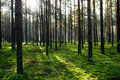 Sun shining in summer forest Stock Image