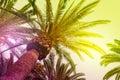 Sun shining through tall palm trees. Royalty Free Stock Photo