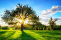 Sun shining through a tree in rural landscape Royalty Free Stock Photo