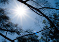 Sun shining through tree in summer season Stock Image