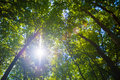 Sun shining through treetops in wood on sunny day Royalty Free Stock Photography