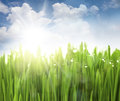 Sun, Sky and Grass with drops Stock Images