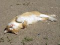 Sunbathing red cat lying on back and taking sunbath Royalty Free Stock Image
