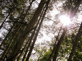 Sunbeam in forest Stock Photos