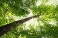 Sunbeam and Tree