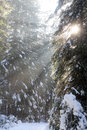 Sunbeams at forest in Low Tatras, Slovakia Royalty Free Stock Image