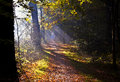 Sunbeams on forest path Royalty Free Stock Photo