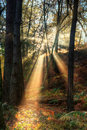 Sunbeams through misty Autumn forest Stock Photography