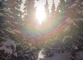 Sunburst through snow covered trees Royalty Free Stock Photo
