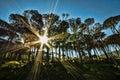 Sunburst through the trees Royalty Free Stock Photo