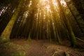 Sunburst through trees Royalty Free Stock Photo