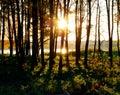 Západ slnka v les
