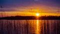 Sundown to lake forest and reeds orange sunbeam reflection Royalty Free Stock Photos