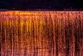 Sundown to lake reeds in orange light Stock Images