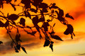 Sunet leaves in autumn Royalty Free Stock Photo