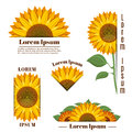 Sunflower banners and vector yellow sun flower labels with text
