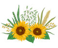 Sunflower, barley, wheat, rye, rice and oat. Collection decorative floral design elements. Royalty Free Stock Photo