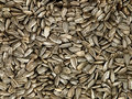 Sunflower Black Seeds. Royalty Free Stock Photos