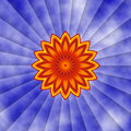 Sunflower Burst Royalty Free Stock Photography