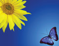 Sunflower and butterfly Stock Images