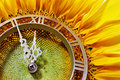 Sunflower-clock Royalty Free Stock Images