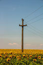 Sunflower and comunication retro telecommunications post located in a field Stock Photography