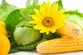 Sunflower, corn, cabbage and pumpkin Stock Photos
