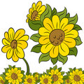 Sunflower Design Element Stock Photos