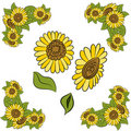 Sunflower Design Element Set Stock Photo