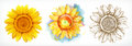 Sunflower, different styles, vector drawing, icon set Royalty Free Stock Photo