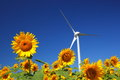 Sunflower field with windmill Royalty Free Stock Photo
