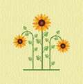 Sunflower floral background for decoration Royalty Free Stock Photos