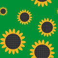 Sunflower flower seamless background Royalty Free Stock Image