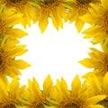 Sunflower frame Royalty Free Stock Photo