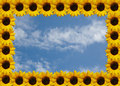 Sunflower frame on sky Royalty Free Stock Photos