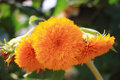 Image : Sunflower  different loving