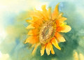 Sunflower on green background watercolor Royalty Free Stock Photo