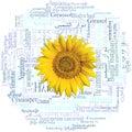 Sunflower head. Sunflower written in fifty-nine different languages. Word cloud.