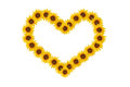 Sunflower of heart. Stock Photo